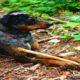 REWARD  LOST DOG - BIGGIE